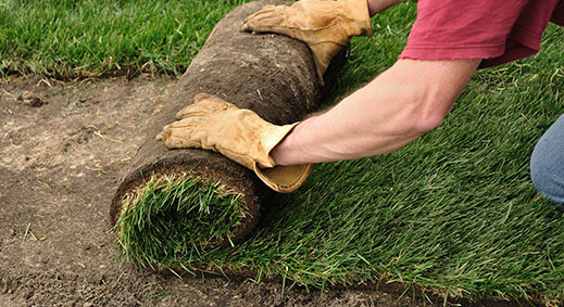 landscaping and sod